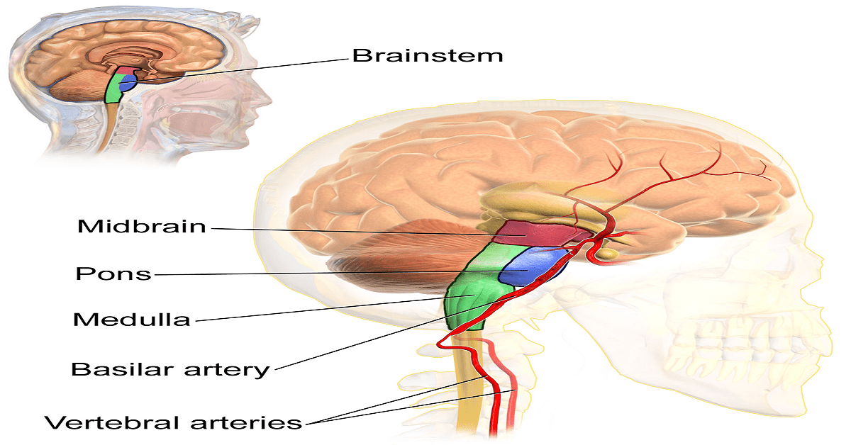 Brain Haemorrhage Symptoms,Causes,Treatment