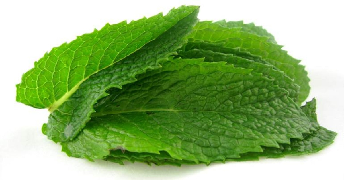How to Use Mint or Pudina as Mouth Freshener?