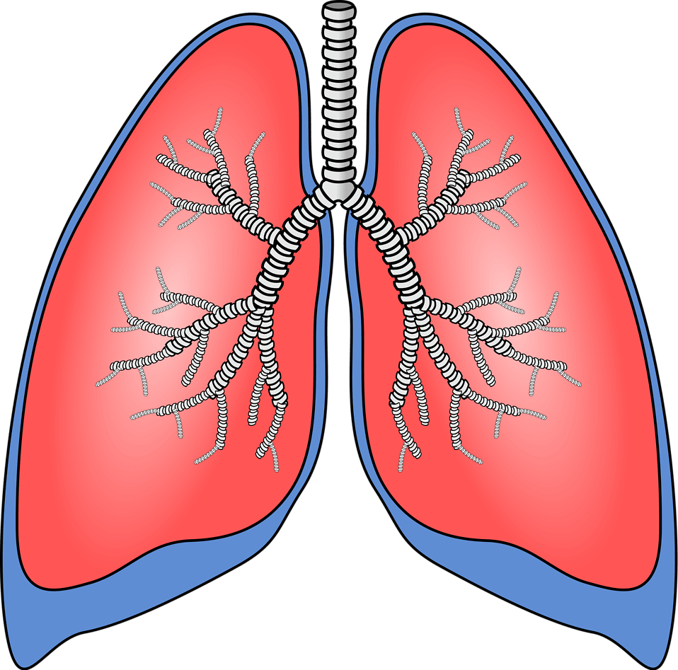 Top 10 Best Ways to Clean Your Lungs Naturally