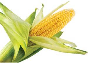 Amazing Health Benefits of Maize (Corn)