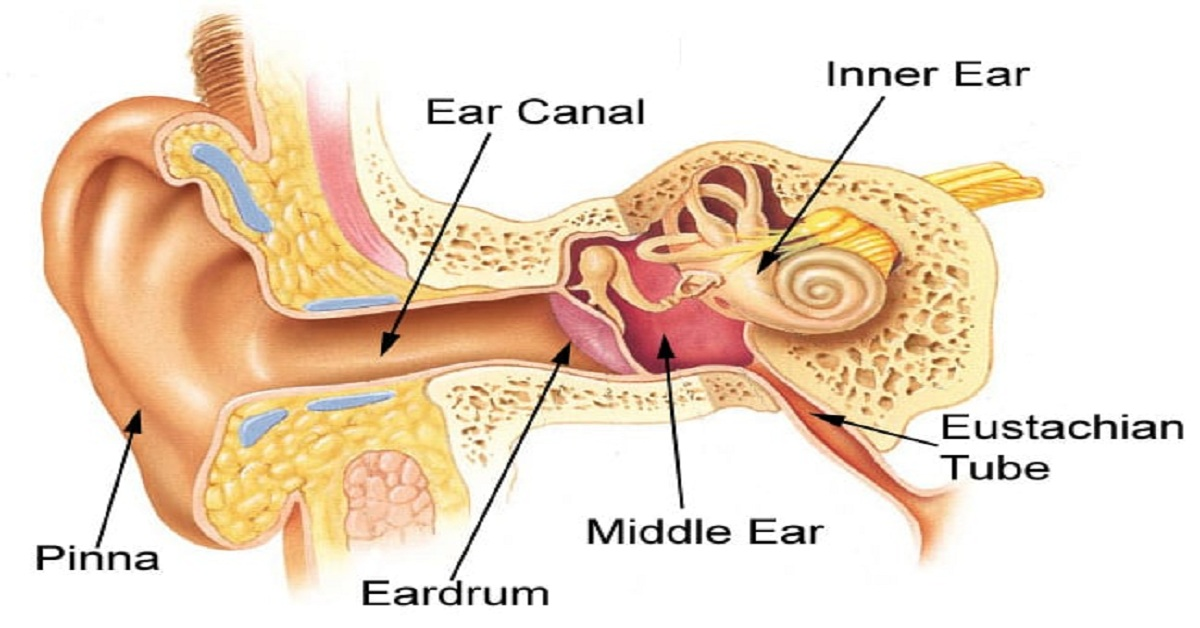 Types and Causes of Hearing Loss