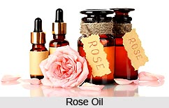 Benefits of Rose Flower oil