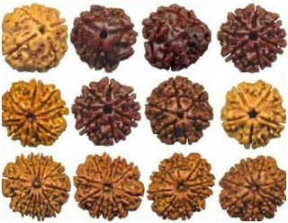Types of Rudraksha