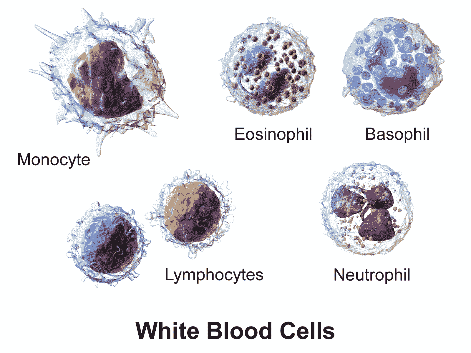 Почему лейкоциты в крови повышены