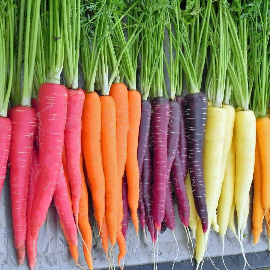different types of carrot