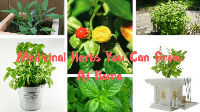 Top 10 Medicinal Herbs You Can Grow At Home