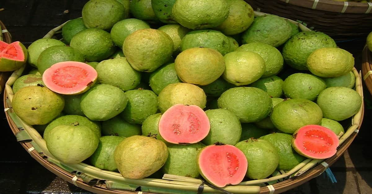 Top 15 unbelievable health benefits of Guava