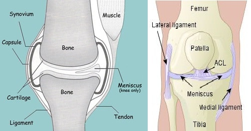 How to increase cartilage in joints